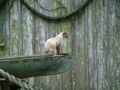 louisiana_cat_canoe