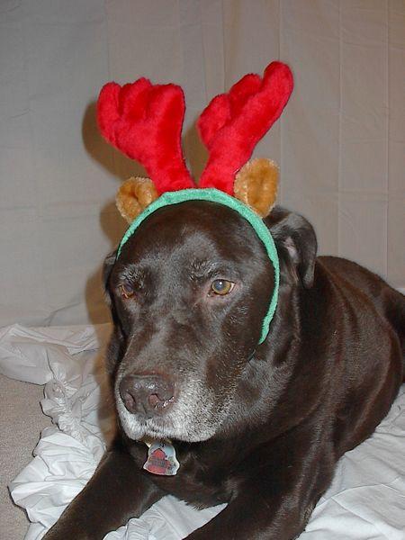 tutooks reindeer