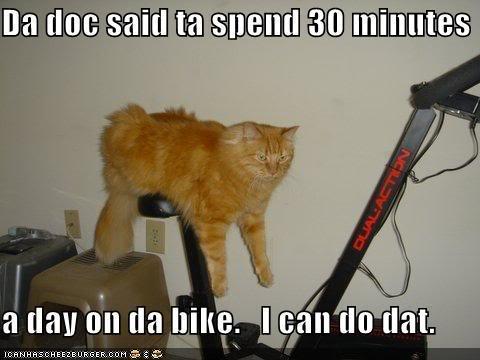 LOL Cat Exercise Bike