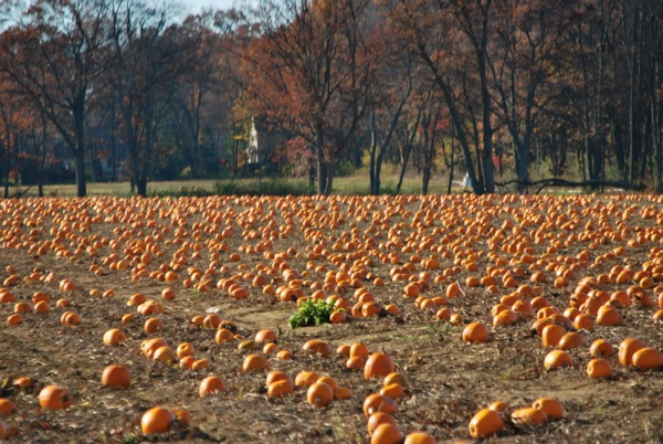 The Great Pumpkin Staging Ground