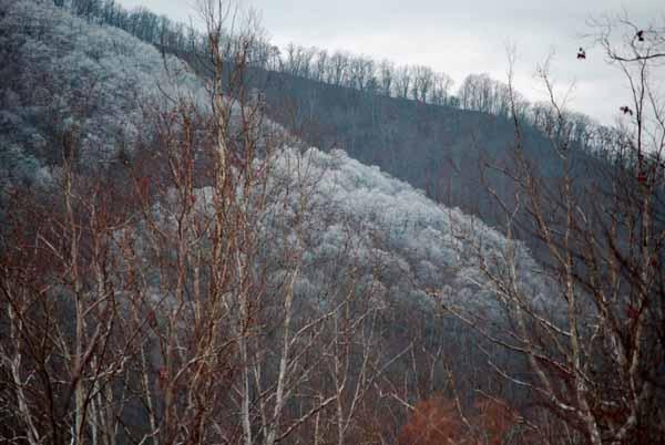 Blue Ridge Cauliflower Mountains