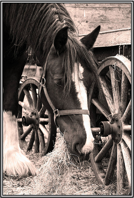 horse-jo-bowling-flickr