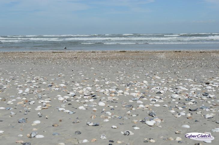 Pea Island Shells
