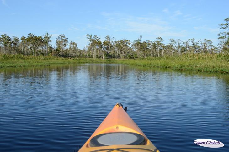 kayaking Alligator River