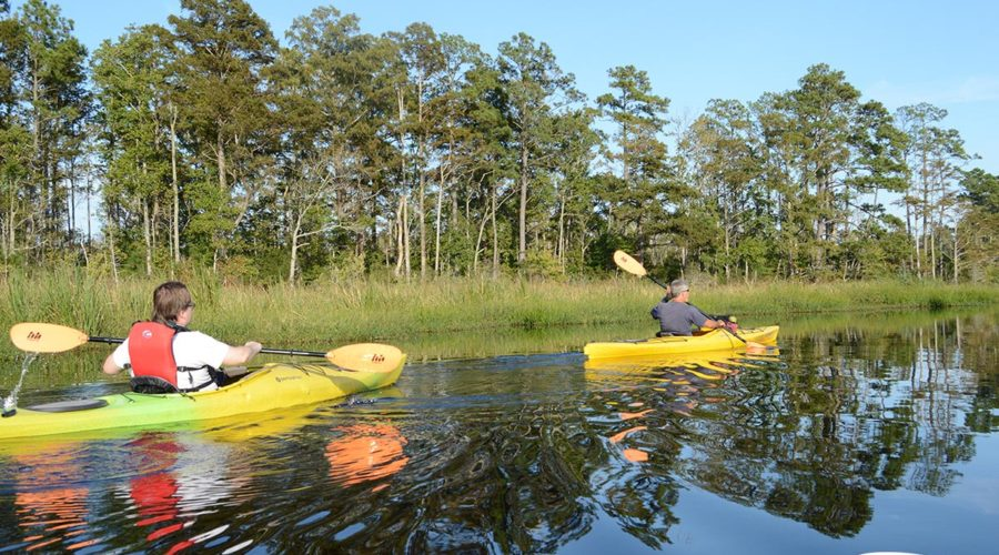 Kayaking in Alligator River National Refuge