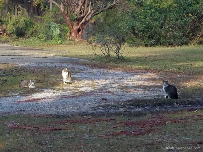 racoon-river-campsite-04