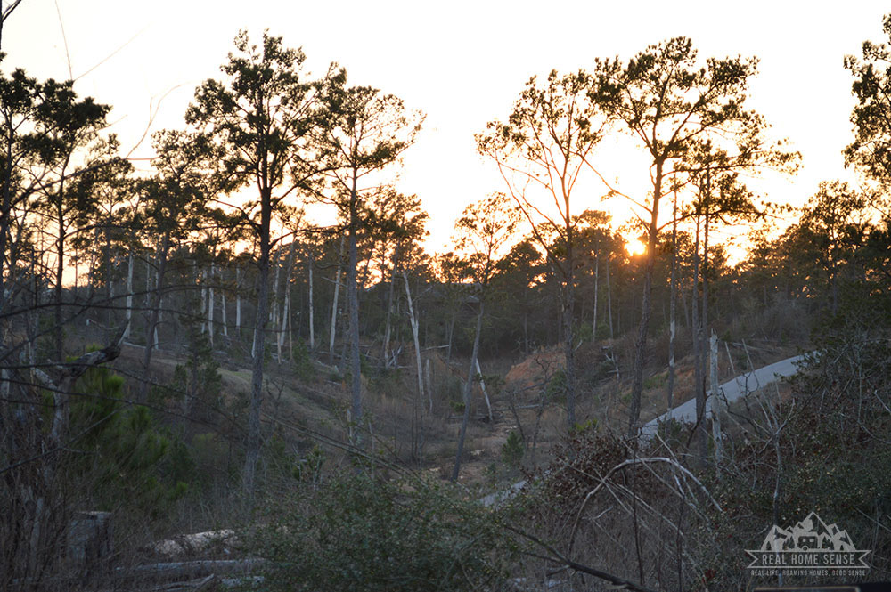 Sunset at Bastrop State Park