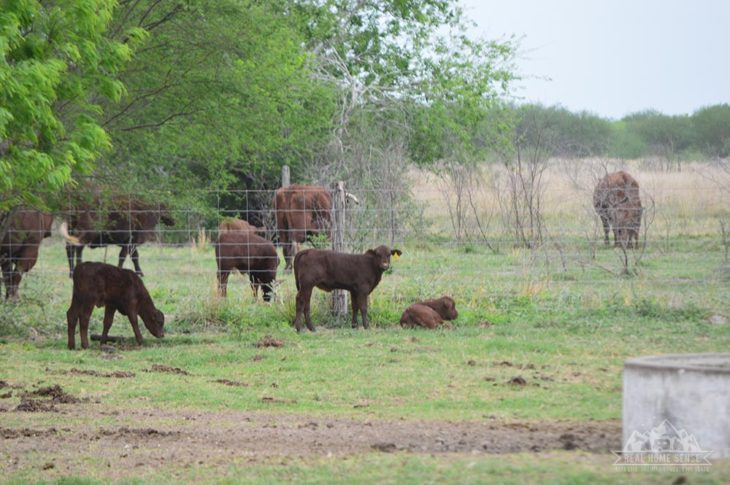 King Ranch, Texas